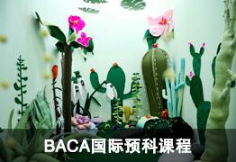 BACA国际预科课程